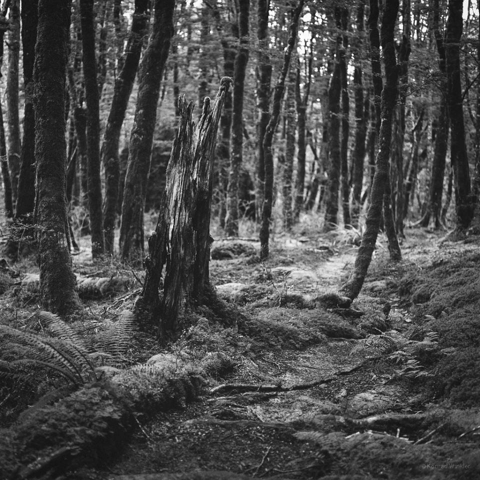 Ein Wald.