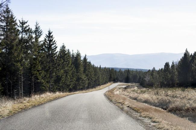 Eine einsame Straße durch den wald.