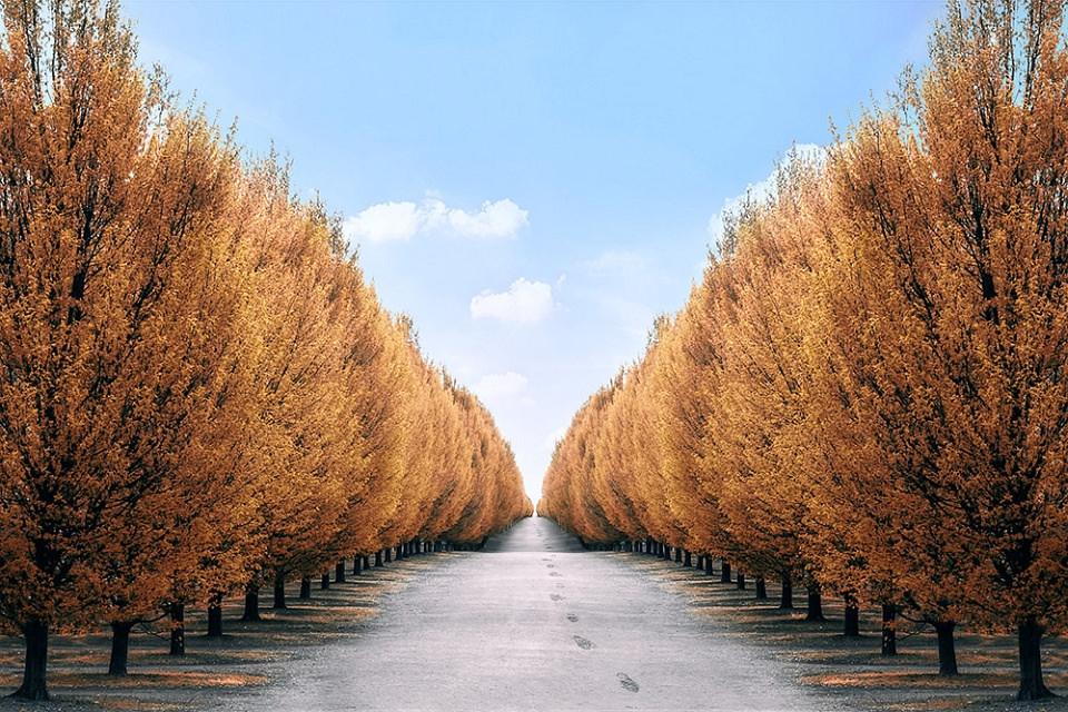 Straße zwischen orange-goldenen Laubbäumen bis zum Horizont, darüber blauer Himmel.
