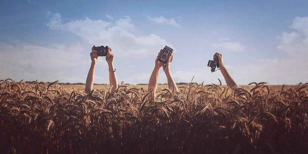 Hände halten Kameras aus einem Feld heraus