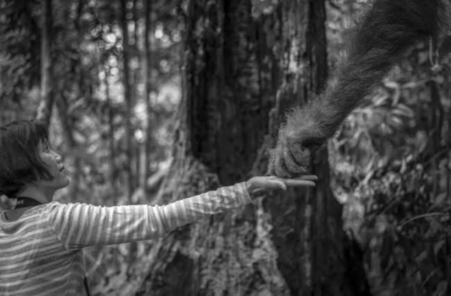 Eine Frau streckt ihre Hand aus und gibt einem Orang-Utan etwas zu naschen.