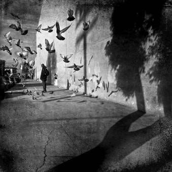 Gasse mit einer Person und einem Schwarm auffliegenden Vögeln