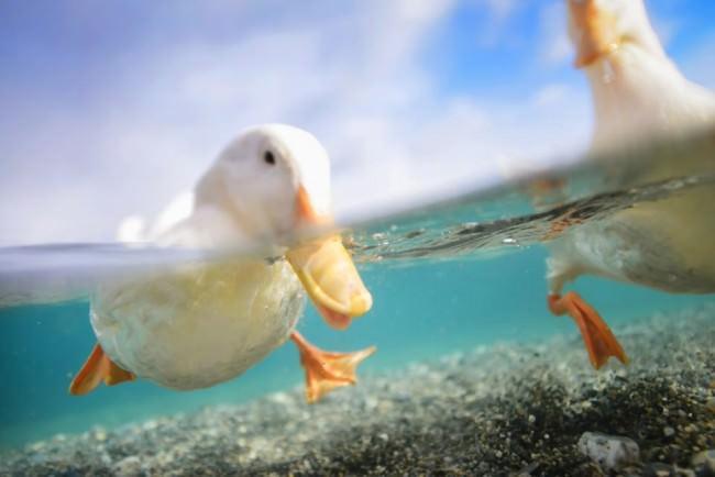Entenfüße Unterwasser