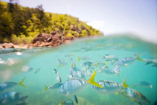 Fische Unterwasser