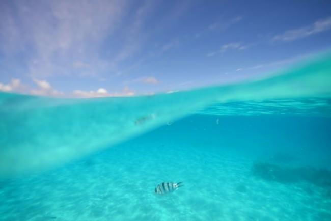 Ein Fisch im Wasser, darüber blauer Himmel