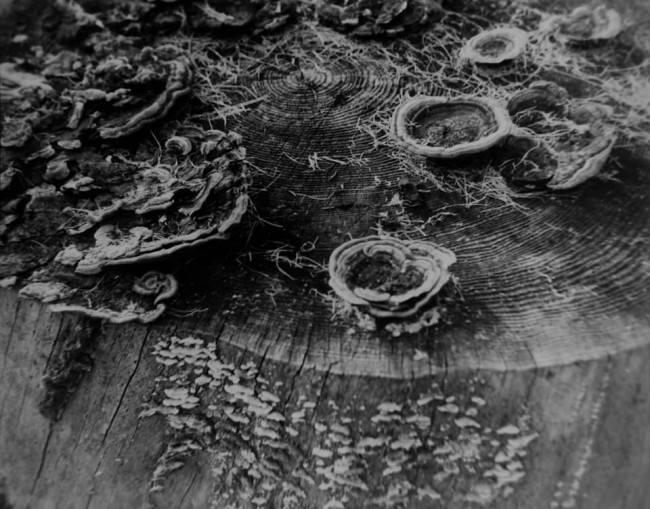 Pilze und Flechten auf der Schnittfläche eines Baumstumpfs.
