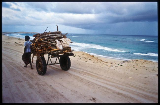 Ein Holzsammler am Strand.