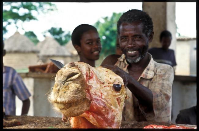 Ein geschlachtetes Kamel und zwei Personen.