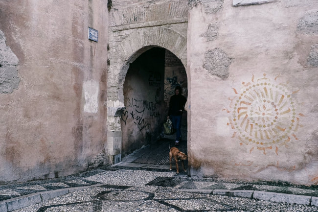 Ein Hund im Torbogen