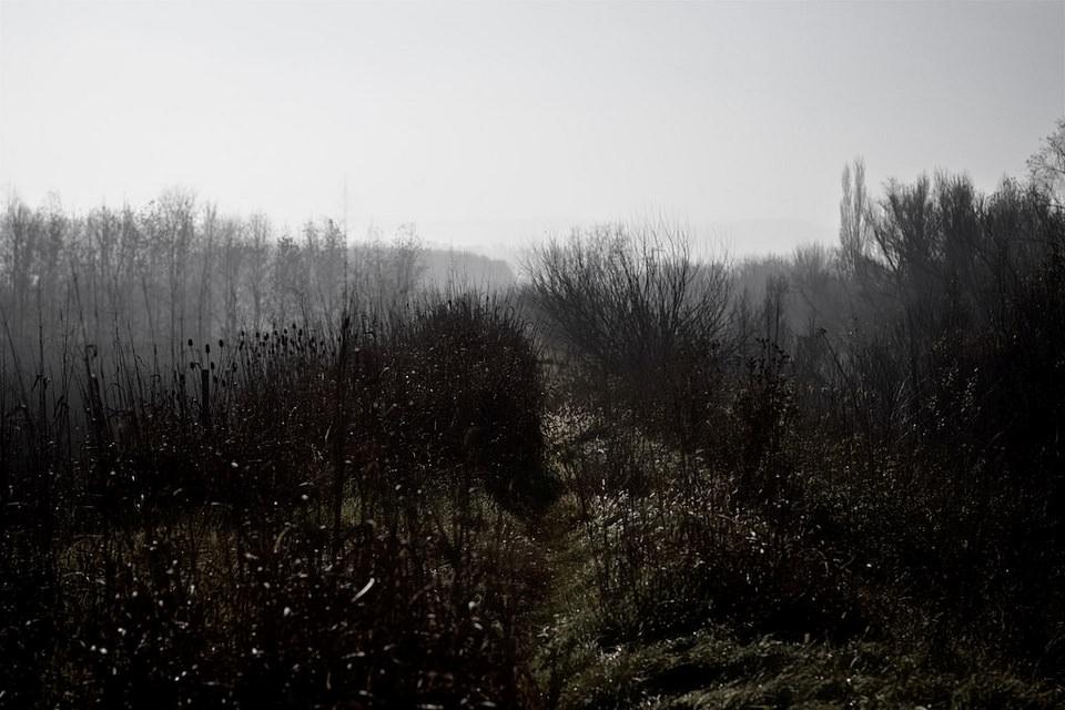 Wilde Landschaft mit struppigen und kahlen Pflanzen.