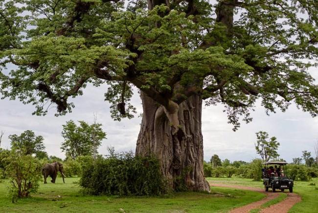 Ein Baum und ein Elefant