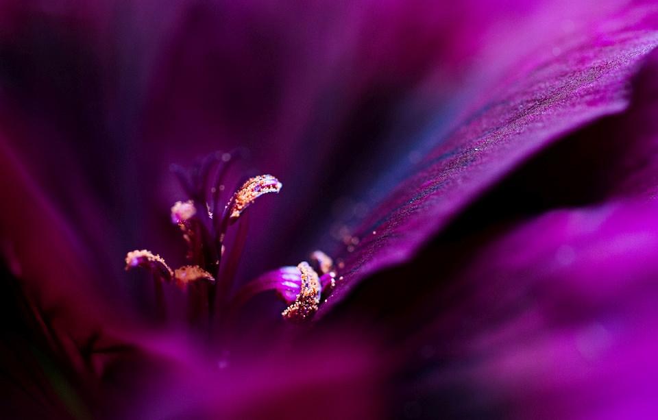Nahaufnahme einer violetten Blüte.
