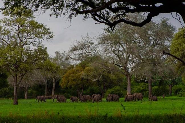 Eine Elefantenherde