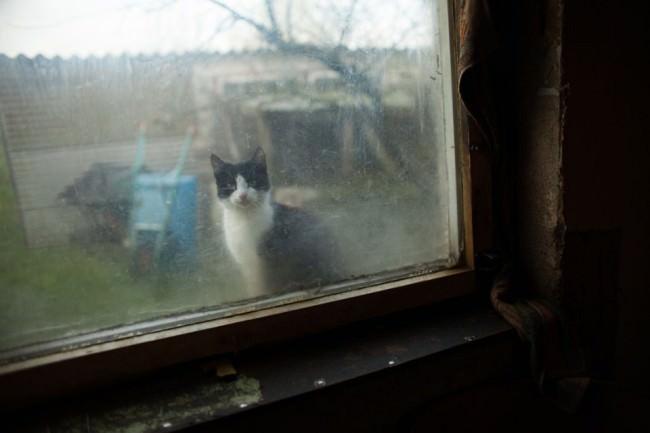 Katze schaut durch ein dreckiges Fenster in ein Haus.