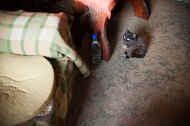 Katze sitzt auf einem schmutzigen Teppich und schaut nach oben.