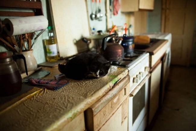 Katze auf einer verdreckten Küchenzeile.