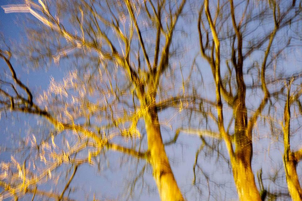 Ein Baum, angeleuchtet im Morgengrauen.