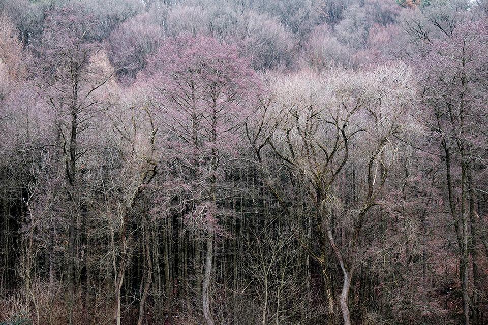 Wald, leicht belaubt, im Herbst.