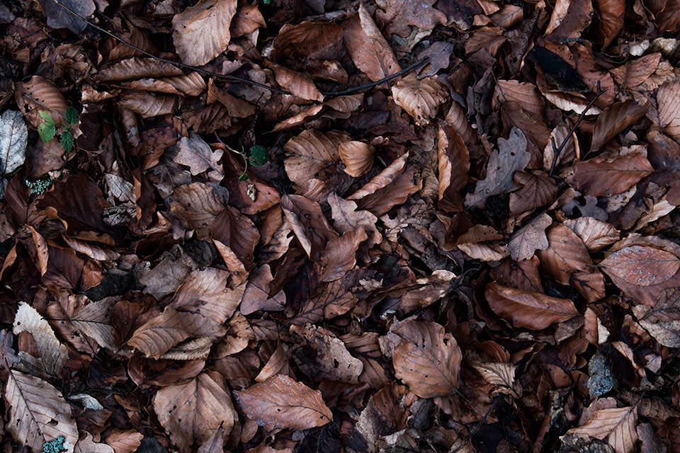 Vertrocknetes Laub auf dem Boden.