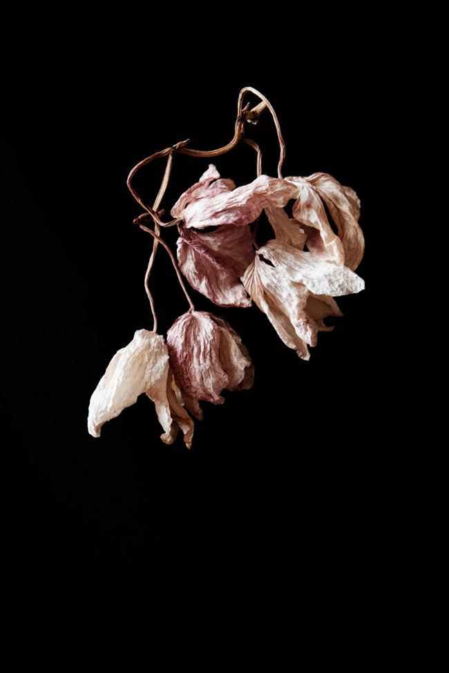 Vertrocknete Blüten aus der Dunkelheit.