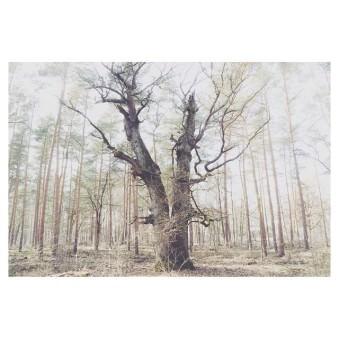 Großer Baum in einem lichten Wald.