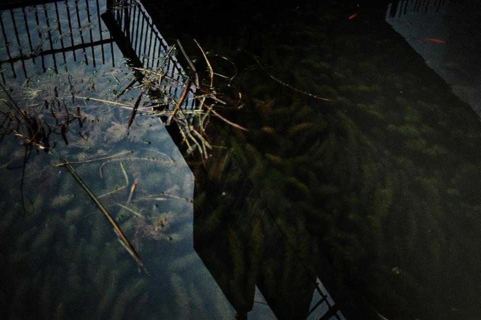 Spiegelungen auf der Wasserobefläche, daneben ein Geländer.