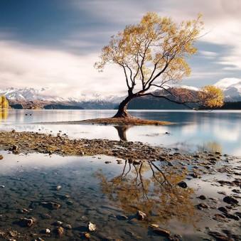 Baum in einem See.