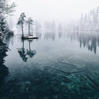 Nadelbäume in und um einen See stehend.