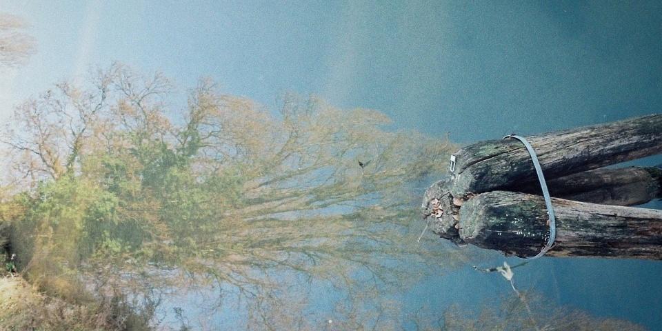 Spiegelung eines Baumes im Wasser, rechts Holzbalken.