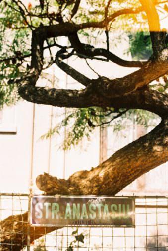 Ein verwachsener Baum, davor ein Straßenschild an einem Zaun.