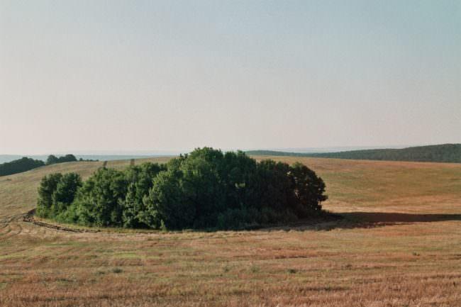 Eine Ansammlung von Bäumen auf einem Feld.