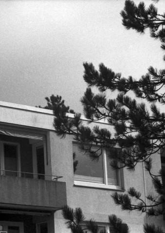 Ein Hochhaus und ein Baum.