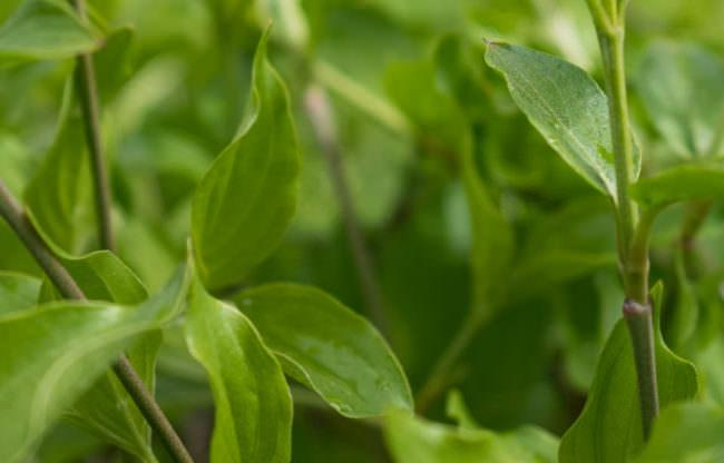 Nahaufnahme grüner Blätter