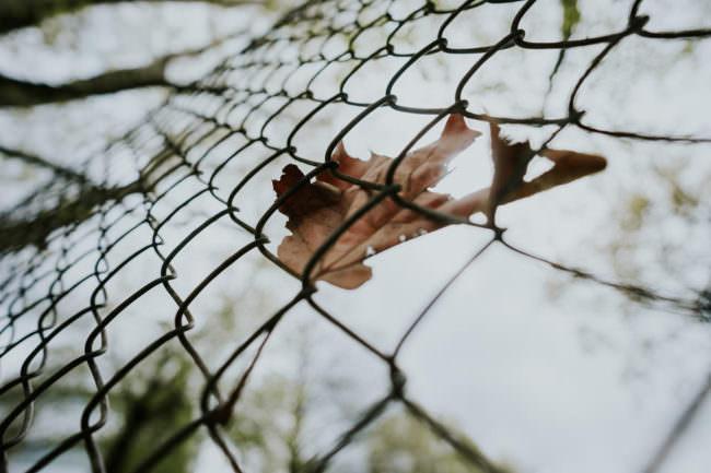 Ein Blatt hängt in einem Zaun