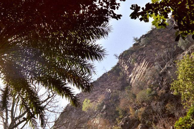 Landschaftsanblick mit Palmwedel im Vordergrund, Berg im Hintergrund.