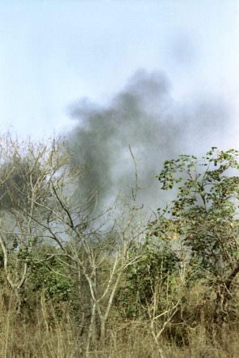 Bäume mit dahinterliegende Rauchwolke.