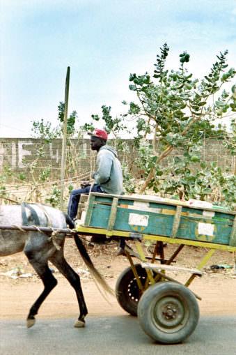 Pferdewagen in der Fahrt mit schwarzem Fahrer.