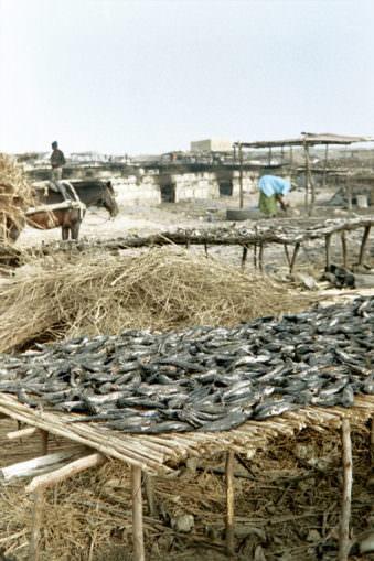 Viel Fisch ausgelegt auf Bambustischen.