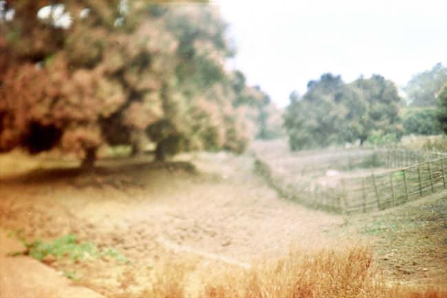 Verschwommener Landschaftsanblick mit großem Baum links und Wiesenfläche mit Einzäunung darauf.