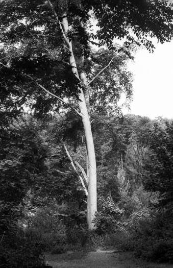 Baumstamm im Wald von der Sonne hell erleuchtet