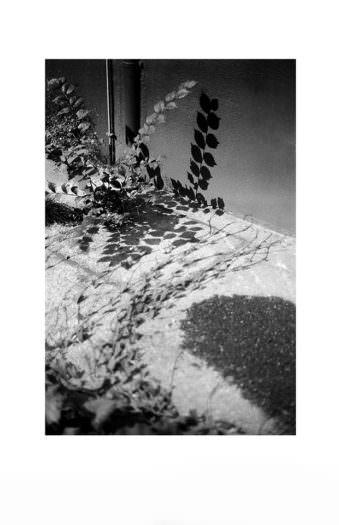 Pflanze wirft Schatten auf eine Wand