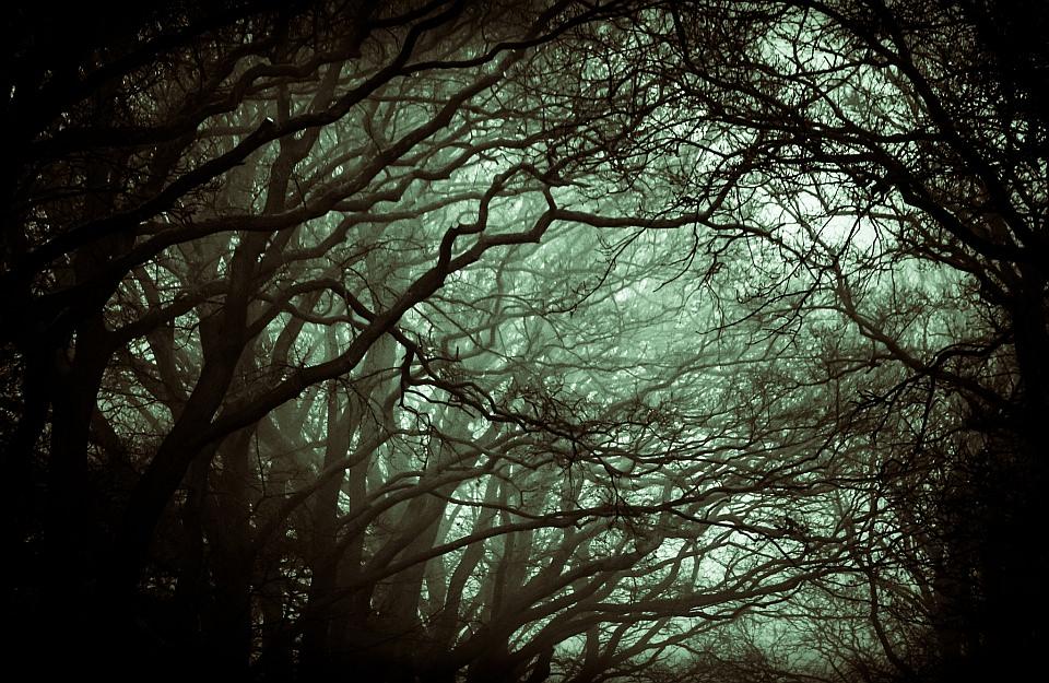 Baumkronen im Dunkel, mit leichtem Nebel.