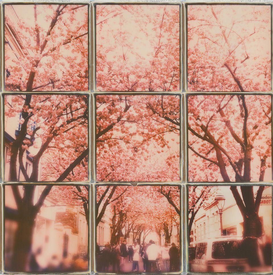 Polaroidcollage einer Straße mit Menschen, überspannt mit blühenden Kirschbäumen.