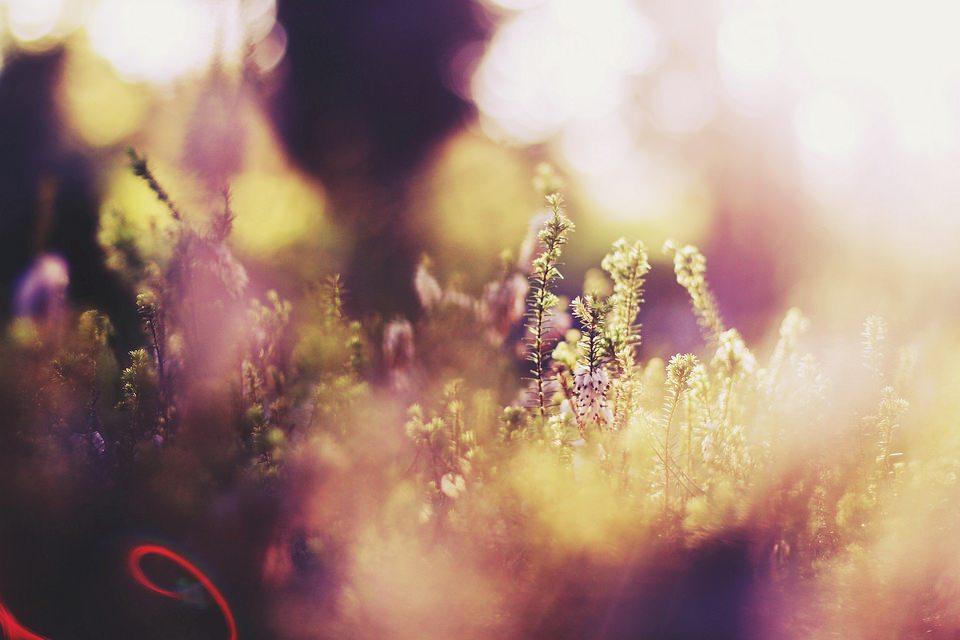 Blumen und Blüten in pink und grün, viel Bokeh, Unschärfe, Lichtspiel