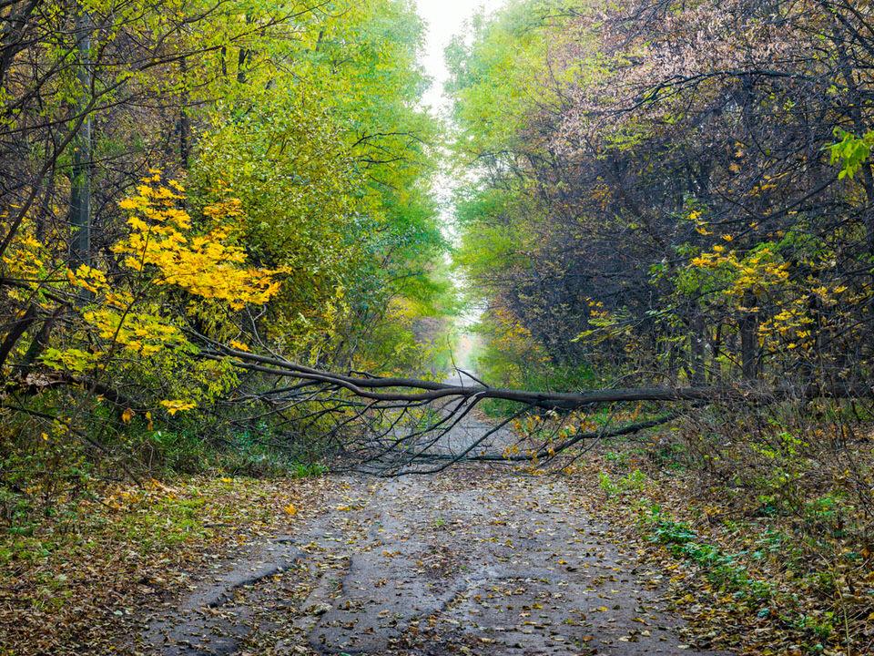 Ein Baum liegt über einem Waldweg