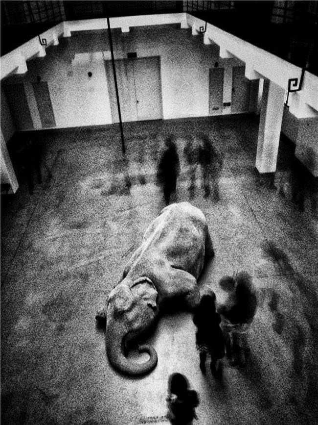 Ein auf dem Boden liegender Elefant, umgeben von Menschen.