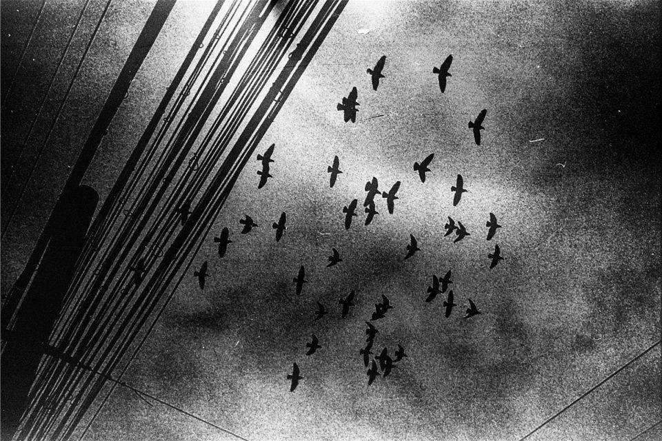 Ein Vogelschwarm fliegt über den Himmel, darunter Stromleitungen.