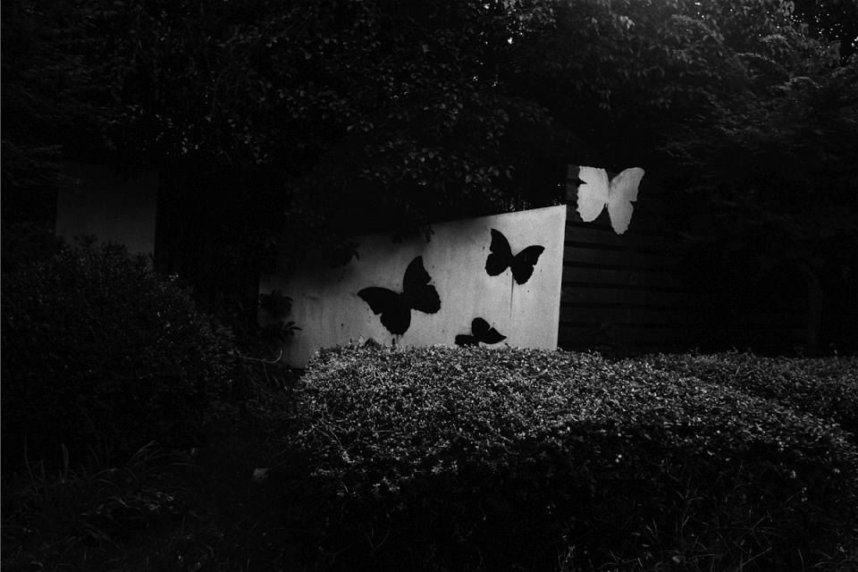 Dekoration mit Schmetterlingen hinter einer Hecke.