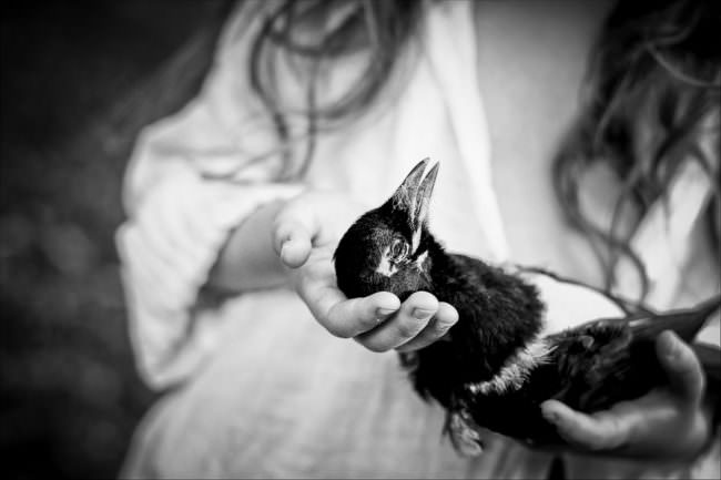 Eine tote Elster in der Hand eines Mädchens.