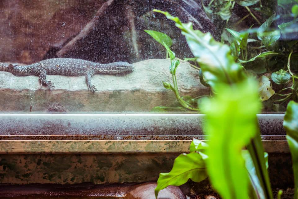 Ein Reptil im Zoo